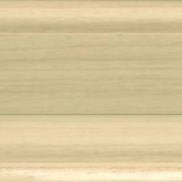 acacia queensland (W172)